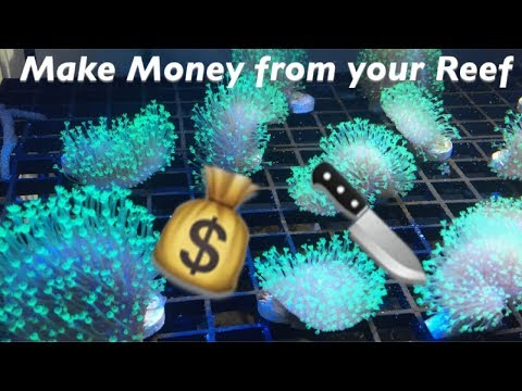 Making MONEY from your Reef: How to Frag a Toadstool Coral