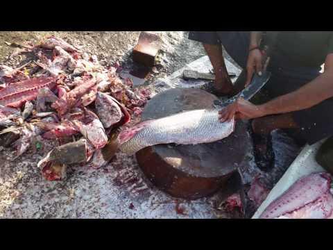 Fish fillet karachi fishries pakistan (karachi style)