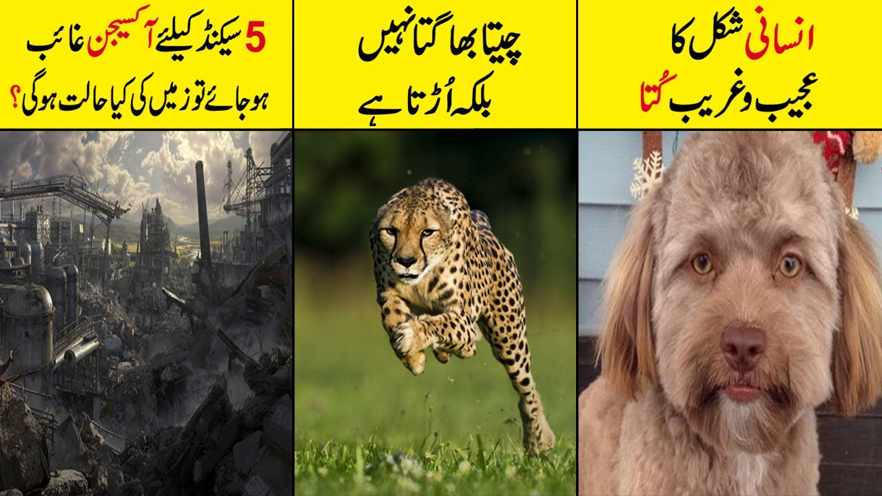 Random Facts Around the World In Hindi/Urdu    Part 1