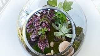 Terrarium With Plants And Moss  (how To Make)
