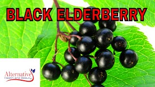Black Elderberry Syrup is a powerful Cold and Flu Remedy and Antiviral Herb