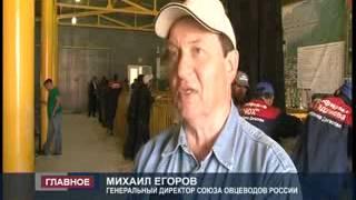 Сюжет 15-ая всероссийская выставка племенных овец.(В Элисте стартовала 15-ая всероссийская выставка племенных овец. Лучшие образцы животных представляют боле..., 2013-05-14T09:58:32.000Z)