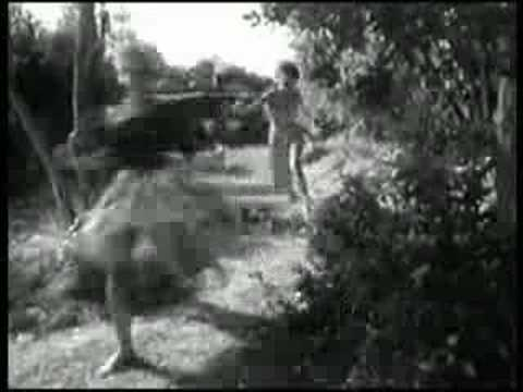 Big Cats - The Bug
