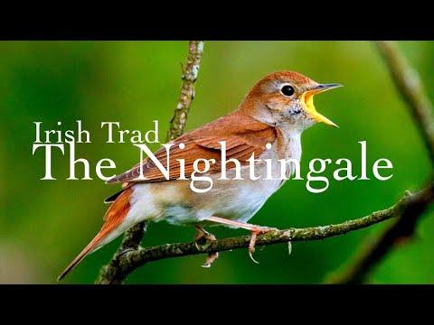 The Nightingale - TJ Irish Trad