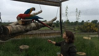 Le parc animalier d'Ecouves a 10 ans