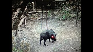 KILL REEL!! Shooting and shanking hogs and deer!