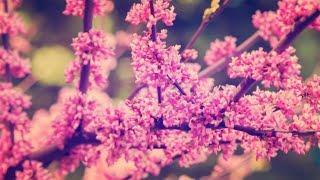 2시간 연속 듣기 | 봄바람 날리는 피아노 | 편안한 연주곡 | 뉴에이지 연주곡