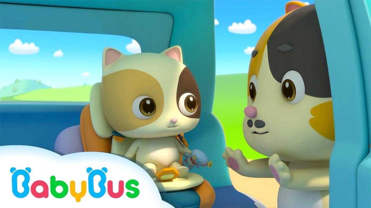 baby kitten unties seat belt