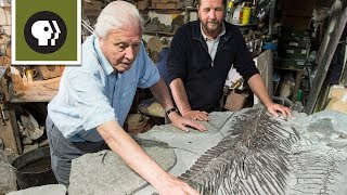 Discovering a New Ichthyosaur