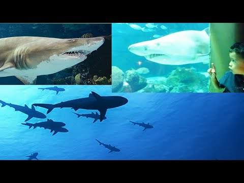 Shark Tank Aquarium in A Coruña | TRAVEL VLOG