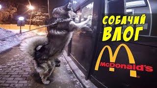 ВЛОГ: СОБАКИ ЛОМЯТСЯ в McDonalds / щенок - новое знакомство