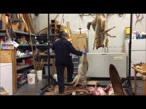 Shop talk - Killing time and removing elk teeth