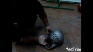 32kg kettlebell supinated wrist turn floor attempt.Попытка переворота 32кг гири на супинатор.Халаджи(2010 год., 2016-02-06T17:16:08.000Z)