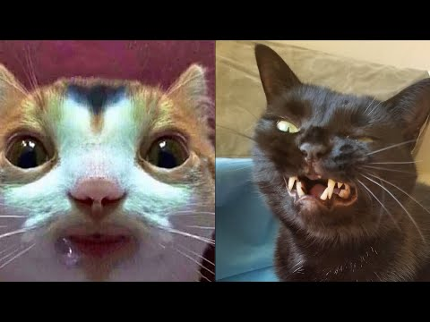 BEST CAT MEMES COMPILATION OF 2020 PART 30 (FUNNY CATS)