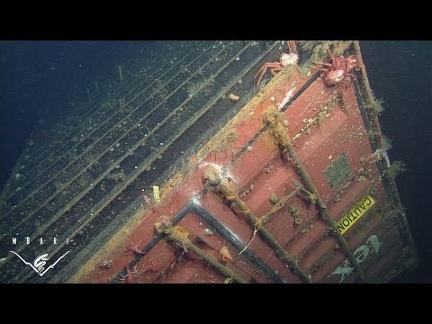 Lost at sea: Ecological assessment around a sunken shipping