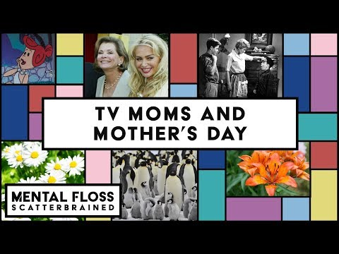 TV Moms, Animal Kingdom Moms, and Mother's Day! - Mental Floss Scatterbrained
