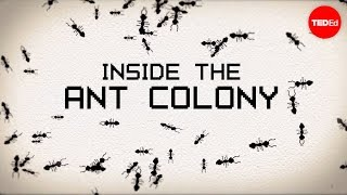 Inside the ant colony - Deborah M. Gordon thumbnail