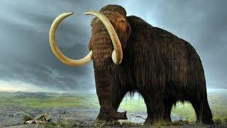 Какими были мамонты в ледниковый период