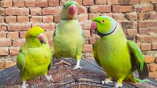 Gorgeous Parrots Talking On Cage