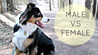 Puppy Series: Choosing a Male or Female Puppy