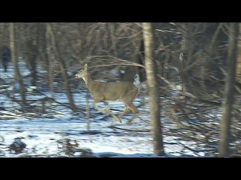 How Eden Prairie Keeps Their Deer Population In Check