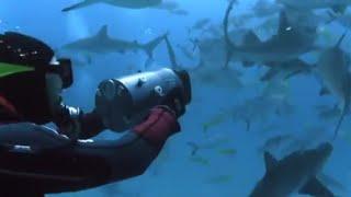 Shark Rodeo | Smart Sharks | BBC Earth