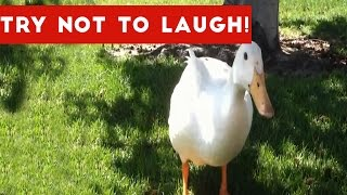 Try Not To Laugh Or Grin At These Funny Animal Clips, Bloopers & Outtakes | Funny Pet Videos