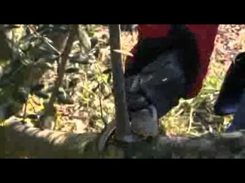 Ηλεκτρονικό ψαλίδι Cobra της Campagnola