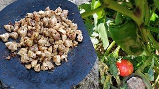 Köyde Yaşam | Kavurma eşliğinde bostandan sebze topladık