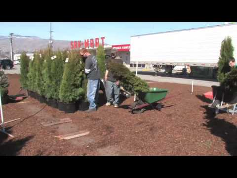 Sav-Mart Garden Center readies for spring