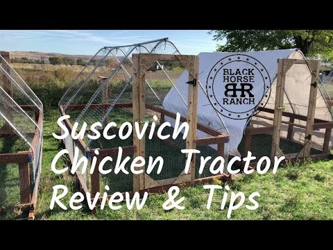 Suscovich Chicken Tractor Review