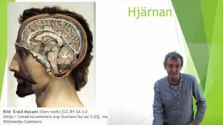 Nervsystemet del 7  (Hjärnan : hjärnstammen)