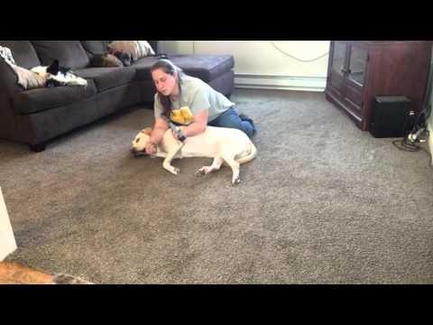 Dog Dremel Training