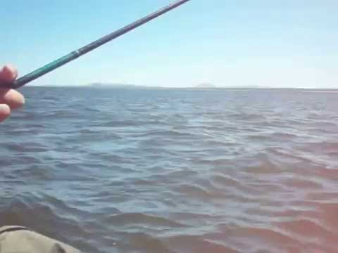 segunda pesca punta ballena