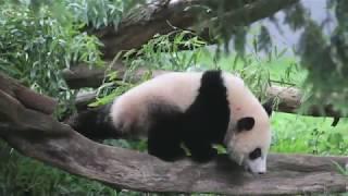 #BaoBaoBday: Zhuazhou