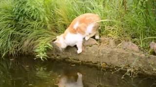 Кот на рыбалке. Добыча поймана и продегустирована.