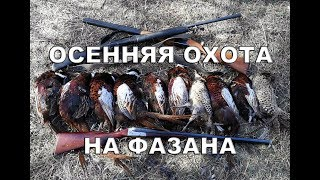 Осенняя охота на фазана в Казахстане