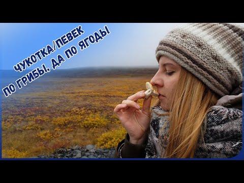 Чукотка/Певек - По грибы, да по ягоды