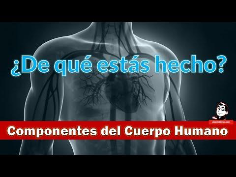¿De qué estás hecho? - Componentes del Cuerpo Humano