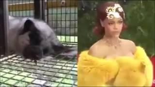 Hayvanlara Eziyet Yapılıyor