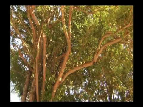 Tejo en el Real Jardín Botánico, CSIC - YouTube