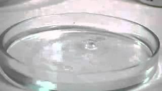Литий с водой