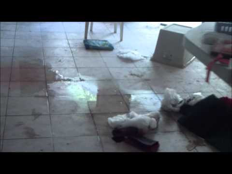 Water Damage Odessa Fl | 813-425-3355 | Odessa REO Water Damage