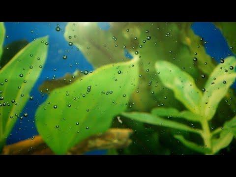Газовая эмболия у рыб в зимний период при подменах и как с ней бороться