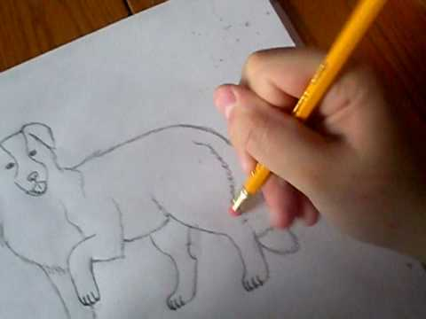 drawing my border collie shyloh youtube