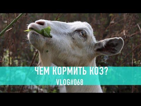 Как правильно кормить коз