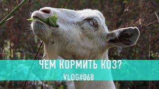 видео: Чем кормить коз? Наш 8 летний опыт