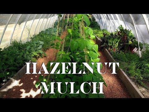 Mulching with Hazelnut Shells