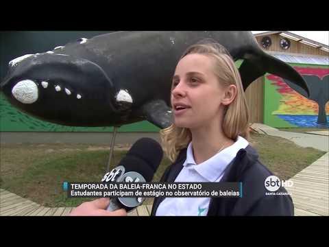 Estudantes observam baleias-francas em Santa Catarina