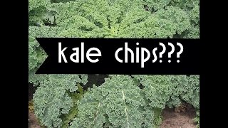 Are Kale Chips Good? - Elizabeth Meero